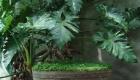 Plantas e folhagens decoração de casamento guaimbê