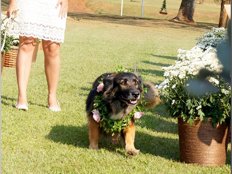 Casamento DIY cachorro levando as alianças