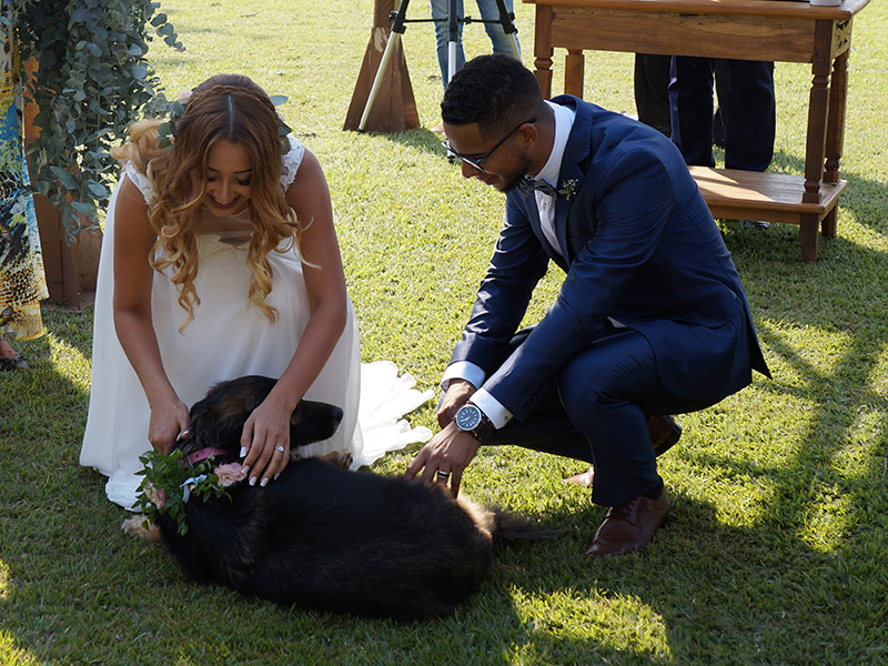 Casamento DIY noivos brincando com cachorro