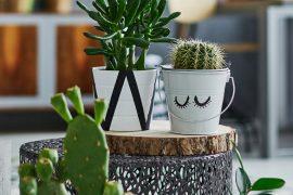 Como refrescar a sua casa usando apenas plantas