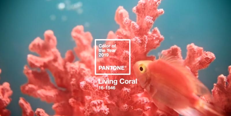 cor do ano 2019 Pantone